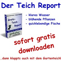 Teich Report