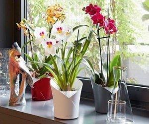 Gartenfreunde Gefäßserie Orchidea