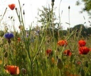 campact Blumensamen